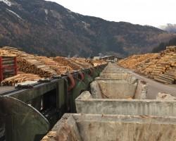 Logsorting conveyor SPRINGER